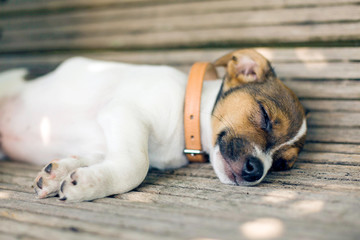 A young furry puppy with a leather collar is sleeping with his eyes closed on a wooden bench