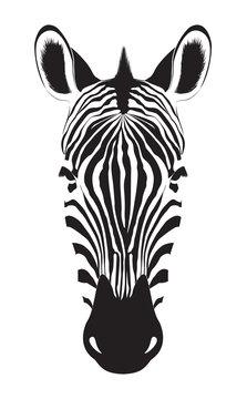 Zebra head isolated on white background. Zebra logo. Vector illustration