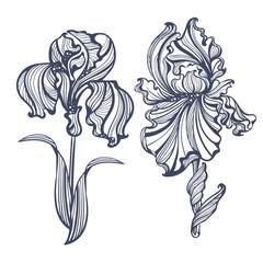 Irises Art Nouveau