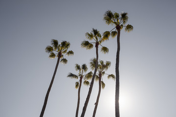 Солнце спряталось за пальму