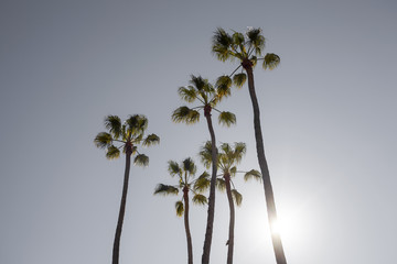 Солнце выходит из-за ствола пальмы