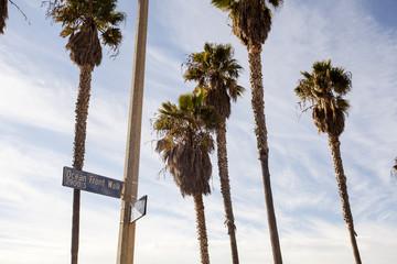 Океанская набережная с пальмами