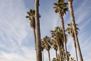 Пальмы днем