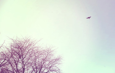 Bird flying free in the sky winter tree