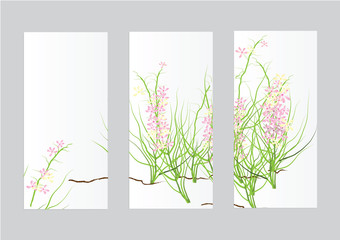 three frame paper of pink wild flower set for decoration isolated picture ,background
