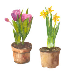 flowers in pots  Watercolor painting. Can be used for postcards, prints and design