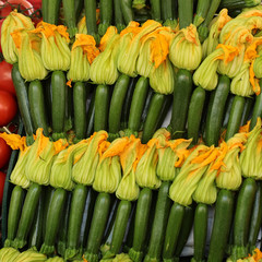 Regular zucchinis  with yellow flowers