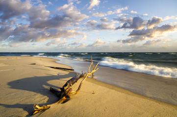 Konar na morskiej plaży