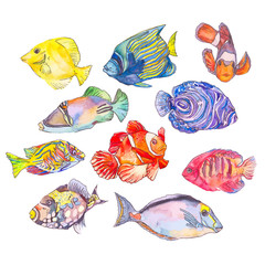 Set of tropical fishes.