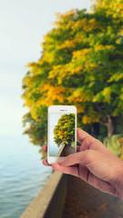 Männliche Hand haltet ein weißes Smartphone und fotografiert damit eine Promenade mit Bäumen