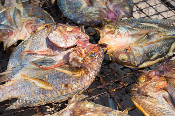 grilled fish on a grille