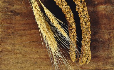 Ear of barley on wood background