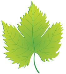 Photos illustrations et vid os de feuille de vigne - Feuille de vigne dessin ...