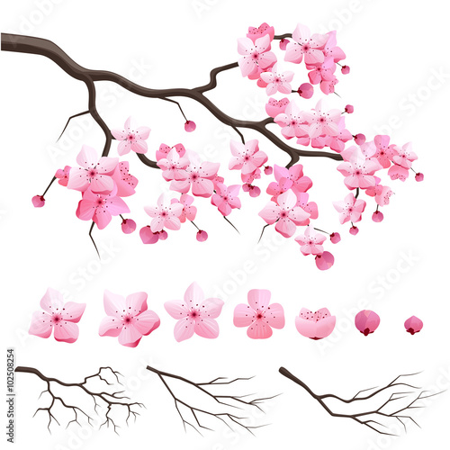 Wall mural Vector japan sakura cherry branch with blooming flowers. Design constructor with blooming cherry branch