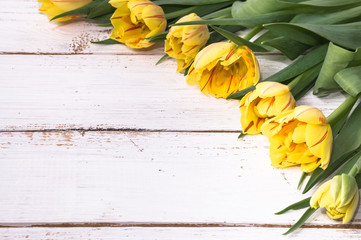 Yellow tulips flowers on white wooden. Background with copy space useful as greeting card.