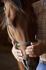 farmers hands holding horses head
