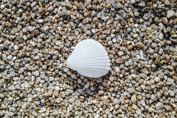 A sea shell lies on a texture of large sand grains.