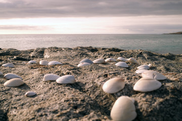 An ocean view image with in the foreground a group of sea shells lie on a rocky part of a beach