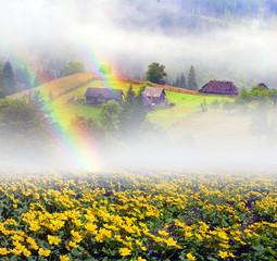 Flower farm in the fog