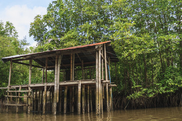 Rest-house in the mangrove forest