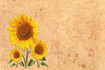 summer background with flowers sunflower