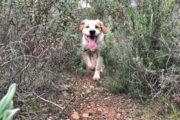 puppy running in a field