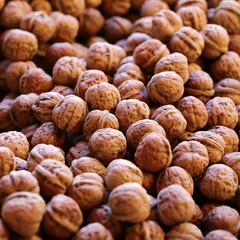 Many walnuts in brown husks