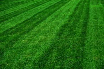 groen grasveld na het maaien