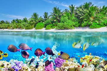 Wall Mural - Tropical island and the underwater world in the Maldives. Thoddo