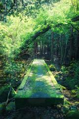 森の石の橋
