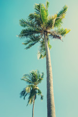 Palm trees in sun light on blue sky. Toned vintage background