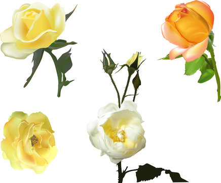 four yellow roses collection