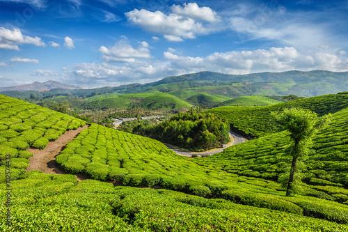 trip and tea plantations