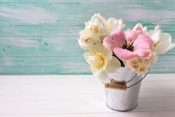 White and pink  tulips and narcissus in bucket