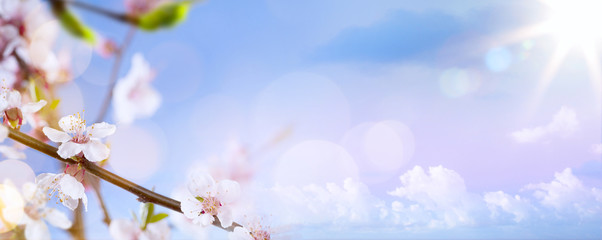 Wall Mural - art Spring blossom background