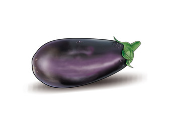 Eggplant isolated on white background. One fresh eggplant with water drops. Vegetables, food. Digital illustration