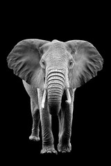Elephant on dark background