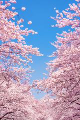 Wall Mural - Kirschblüten vor blauem Himmel als Hintergrund im Hochformat
