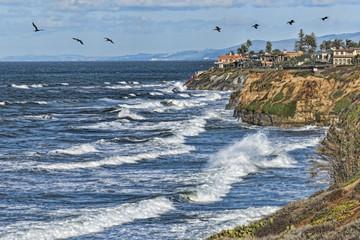 Seabirds near Carlsbad Cliffs. Carlsbad is in San Diego county, California, USA