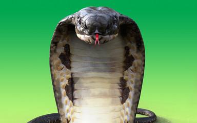 Close-Up Of 3D king Cobra The world's longest venomous snake on green