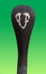 Portrait 3d King cobra snake isolated on green background