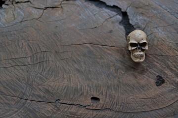 Still life skull - Human skull on old wooden crack surface - vintage human skull on slit wooden table for your text & design
