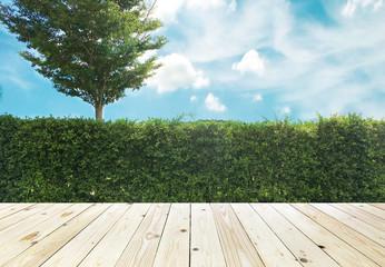 Aluminium Prints Garden Grown tree wall and ornamental shrub