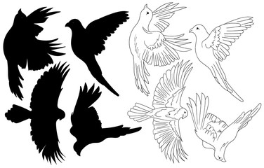 vector flying shapes of birds logo