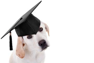Graduation graduate puppy dog school training