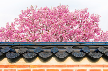Wall Mural - Cherry Blossom with roof of temple in spring.