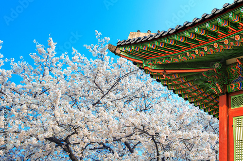Wall mural Cherry Blossom with roof of temple in spring.