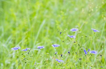 small purple flowers in a green field