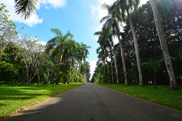 Royal Botanical Garden Peradeniya, Sri Lanka