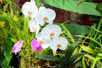 Colorful Flowers At Royal Botanical Garden Peradeniya, Sri Lanka